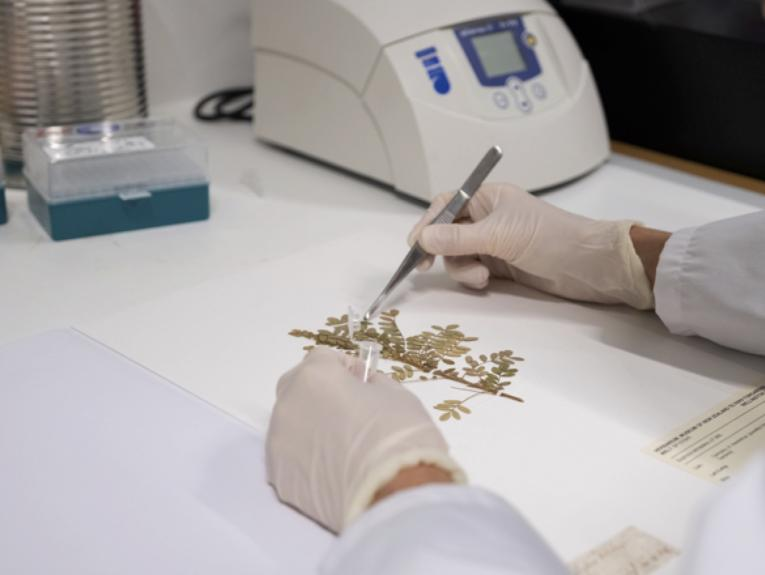 A scientist wearing blue gloves creating a page with a plant specimen on it