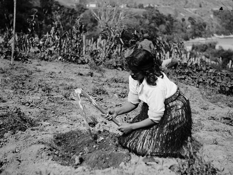 Māori woman gardening with a tool called a timo