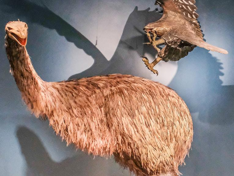 Giant moa and Haast's eagle in Blood Earth Fire