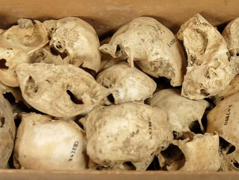 A box of small bones