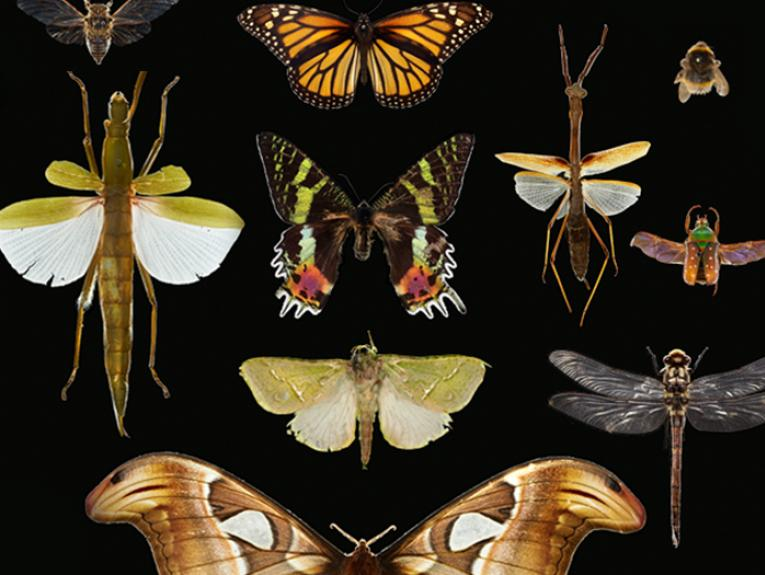 Moths, butterflies, bees, dragonflies, and stick insects