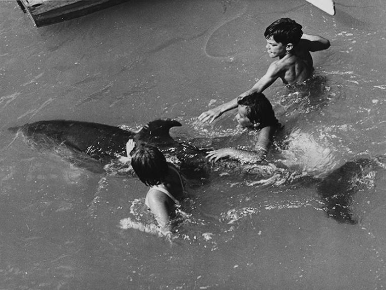 Children playing with Opo (a bottlenose dolphin, Tursiops truncatus), Opononi, 1956.