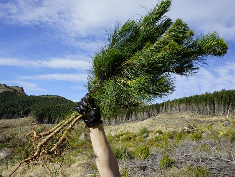 A black-gloved hand is holding a small pine tree with its roots showing in the air