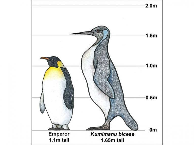 A drawing of a standard Emperor penguin and a much larger penguin