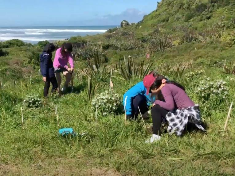 Four people planting and weeding plants on the side of a sand dune