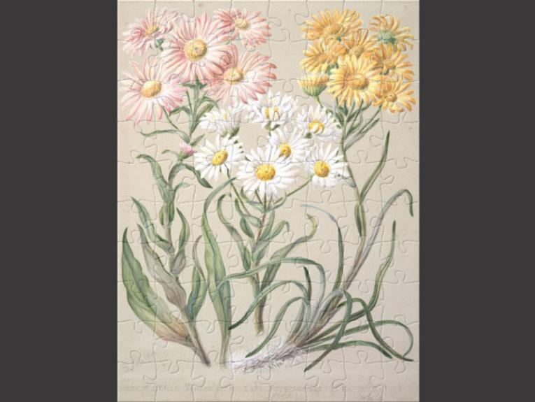 Puzzle with daisies on it