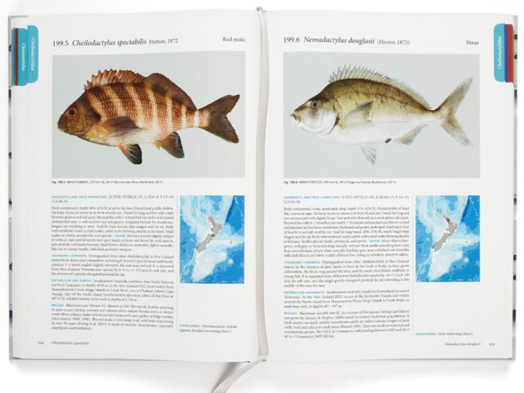 Internal pages, photograph by Michael Hall. From The Fishes of New Zealand, edited by Clive Roberts, Andrew Stewart, and Carl Struthers, 2015