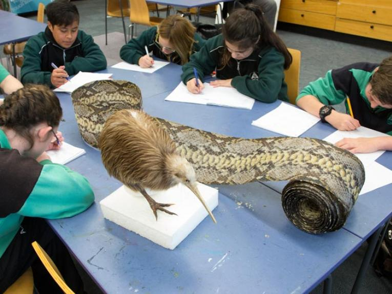 Students with taxidermy kiwi and snake skin