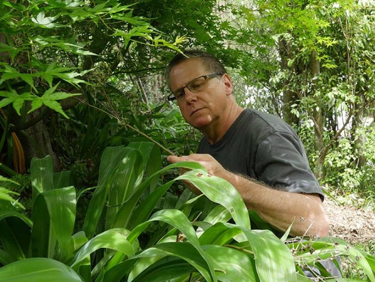 Author among plants
