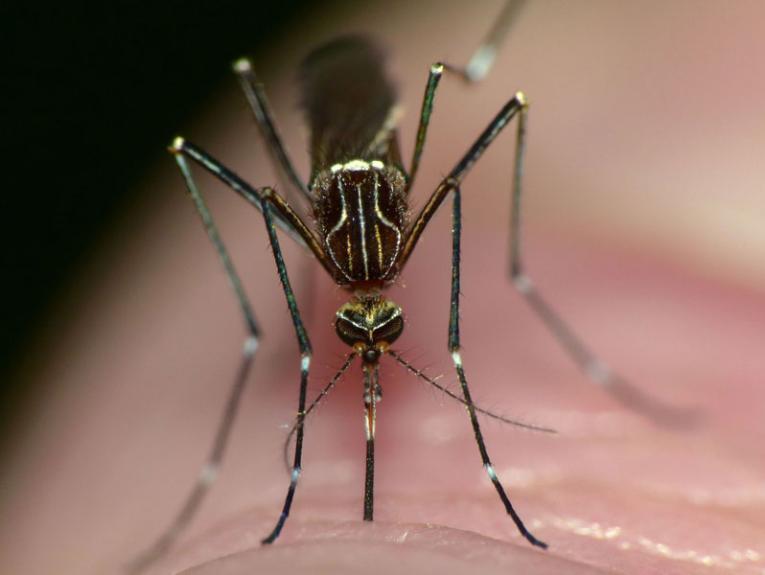 Mosquito sucking someones blood