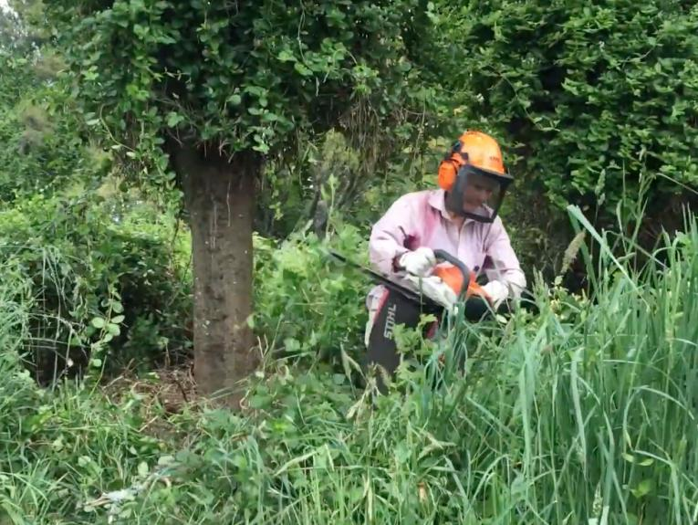 A woman in safety gear chainsawing weeds around the base of a tree