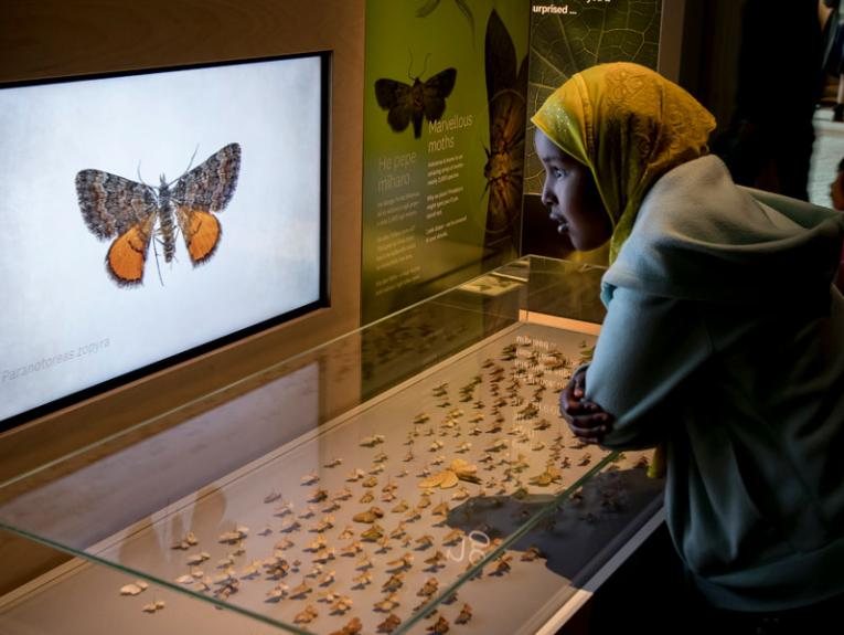 A girl looks at moths