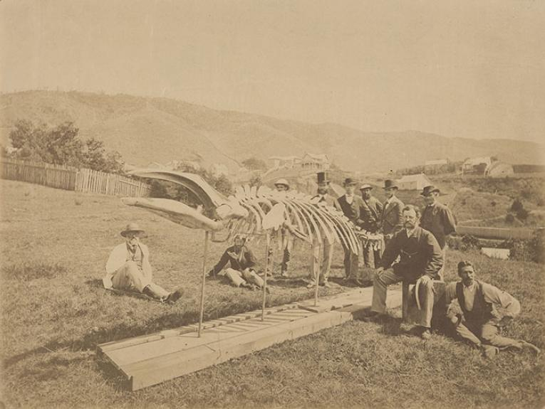 1874 photo of ten men, including Colonial Museum personnel, assembled around the skeleton of a pygmy right whale