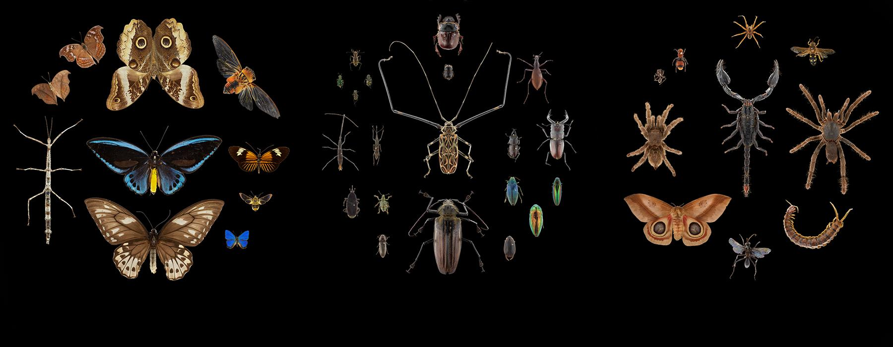 Lots of bugs from moths to spiders, stick insects to beetles