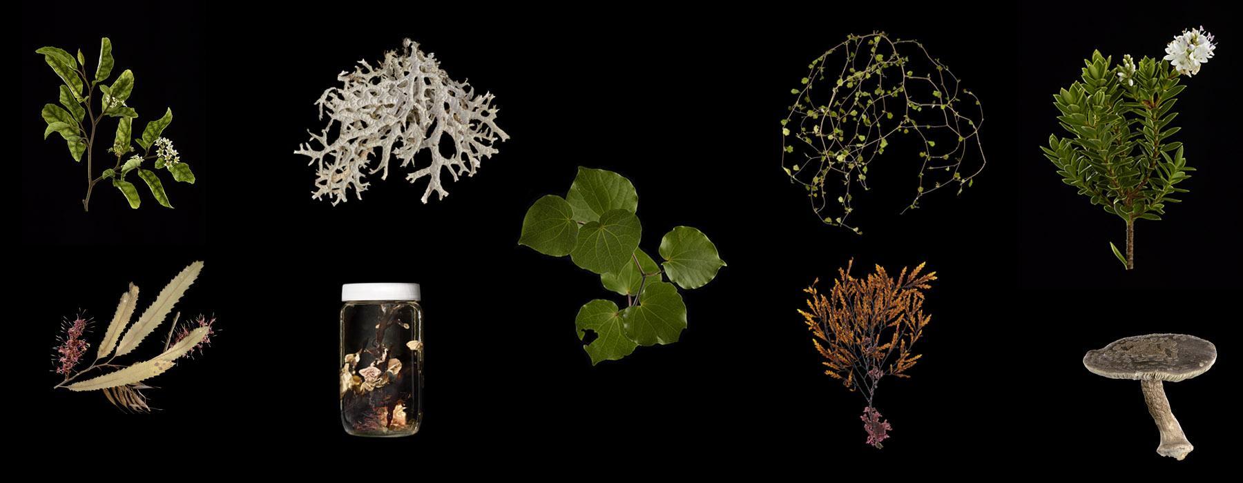 Nine plant specimens on a black background