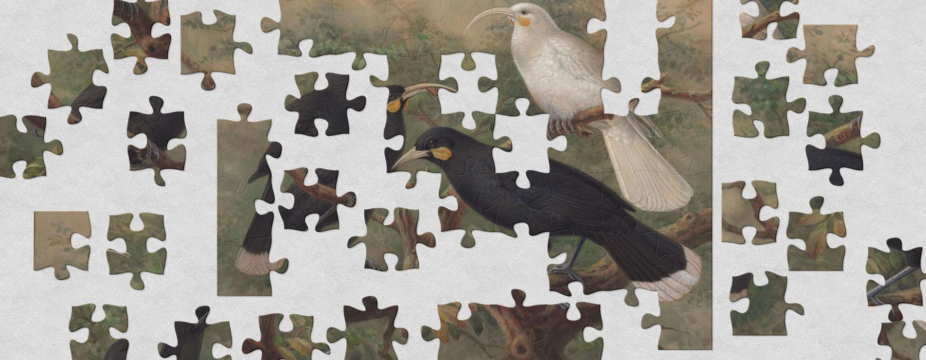 A jigsaw puzzle featuring a painting of three huia birds