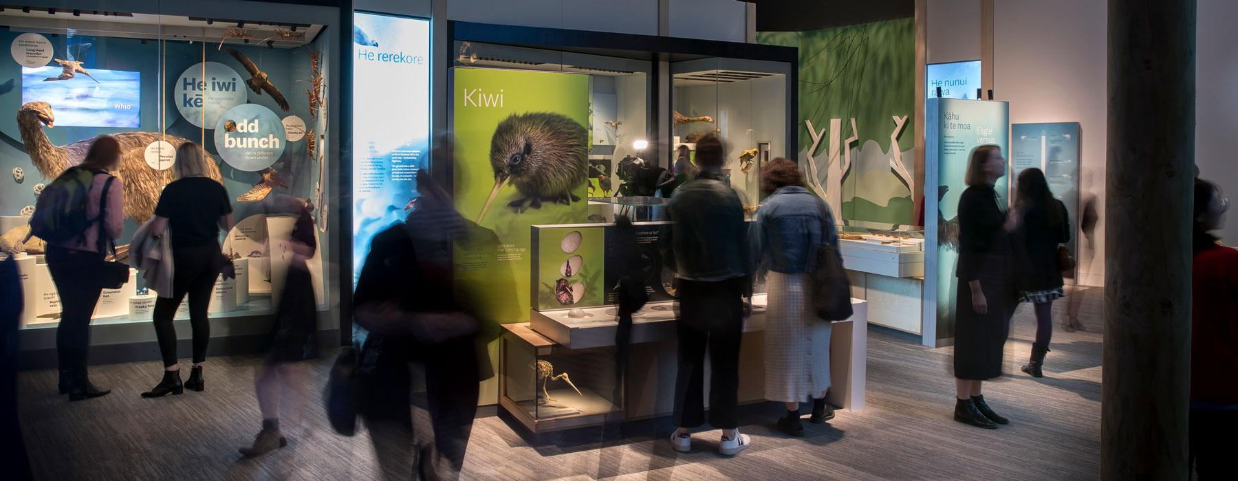 Visitors in the Te Taiao   Nature exhibition
