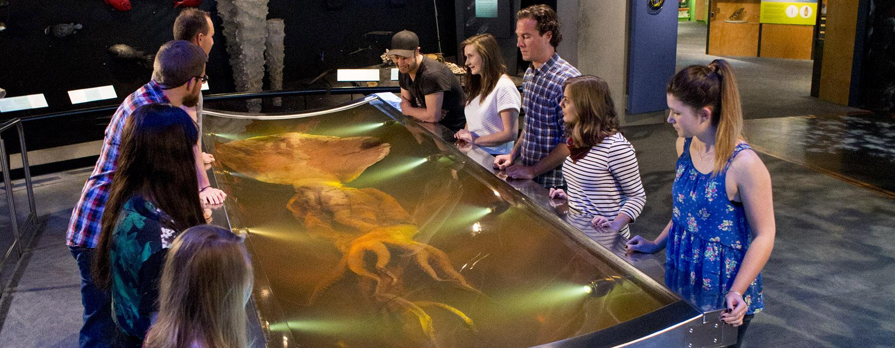 Visitors looking at the giant squid