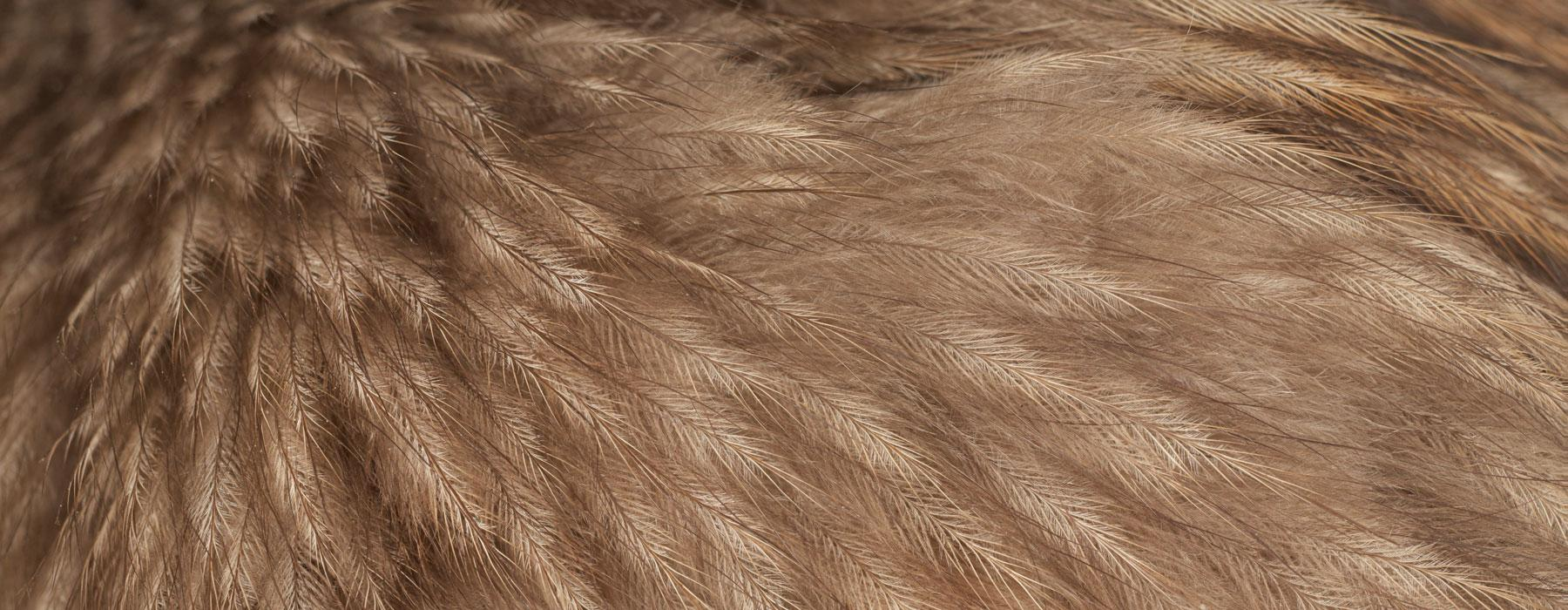 Close-up of brown feathers