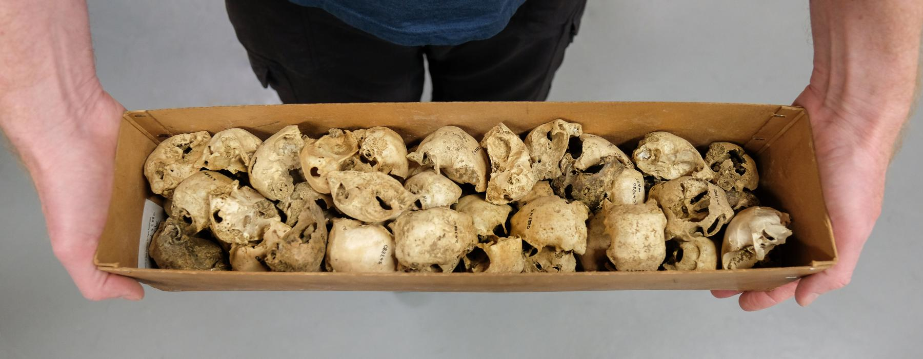 Two hands holding a box of moa skulls