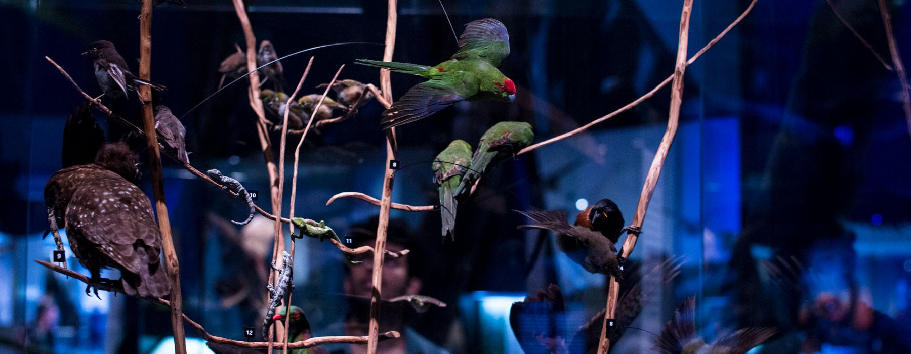 Taxidermy birds in the Mountains to Sea exhibition