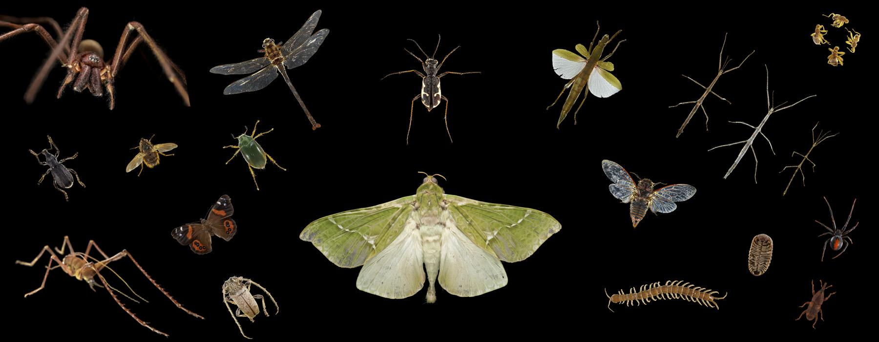 18 types of bugs and insects on a black background