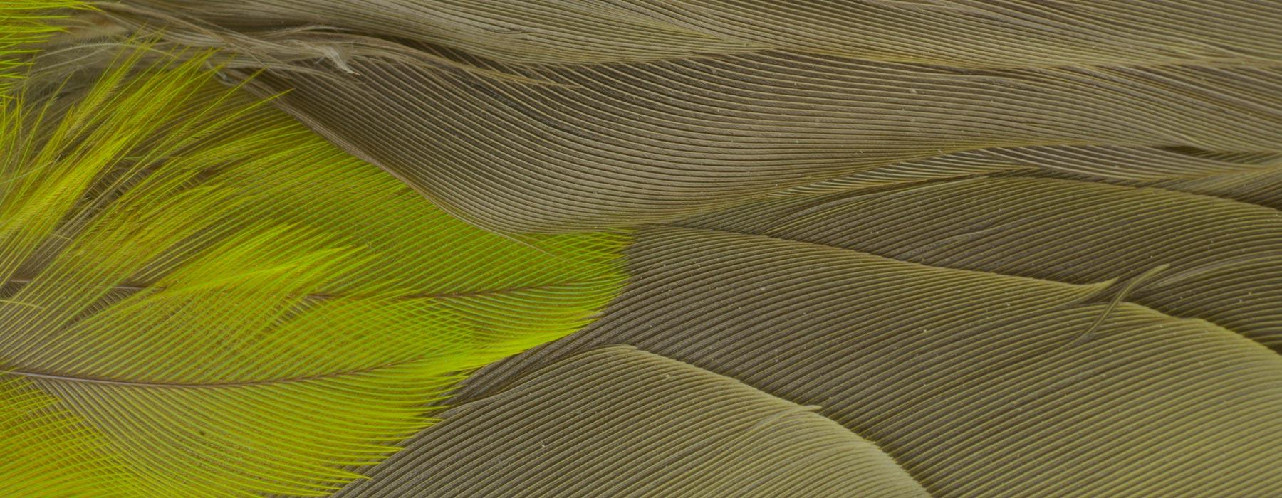 Extreme close-up of green feathers