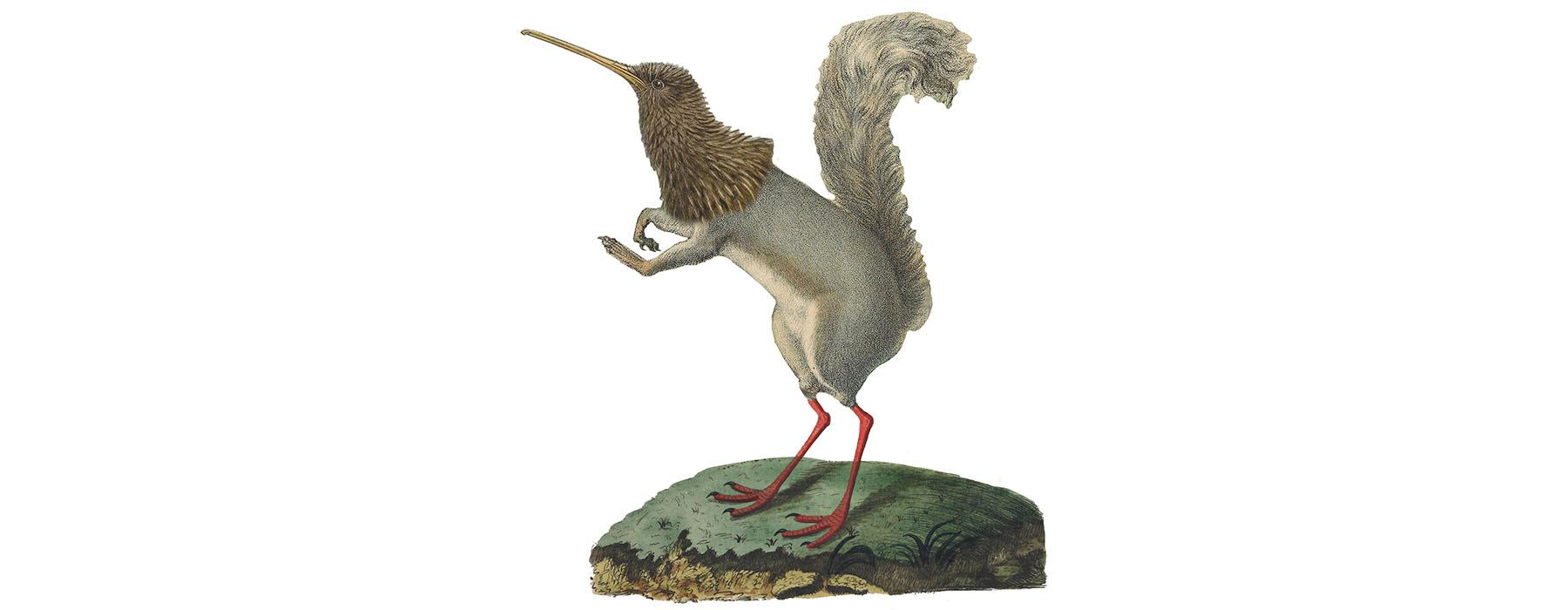 Image of an animal made up of three separate pictures: the head of a kiwi, the body of a squirrel, and the legs of a bird