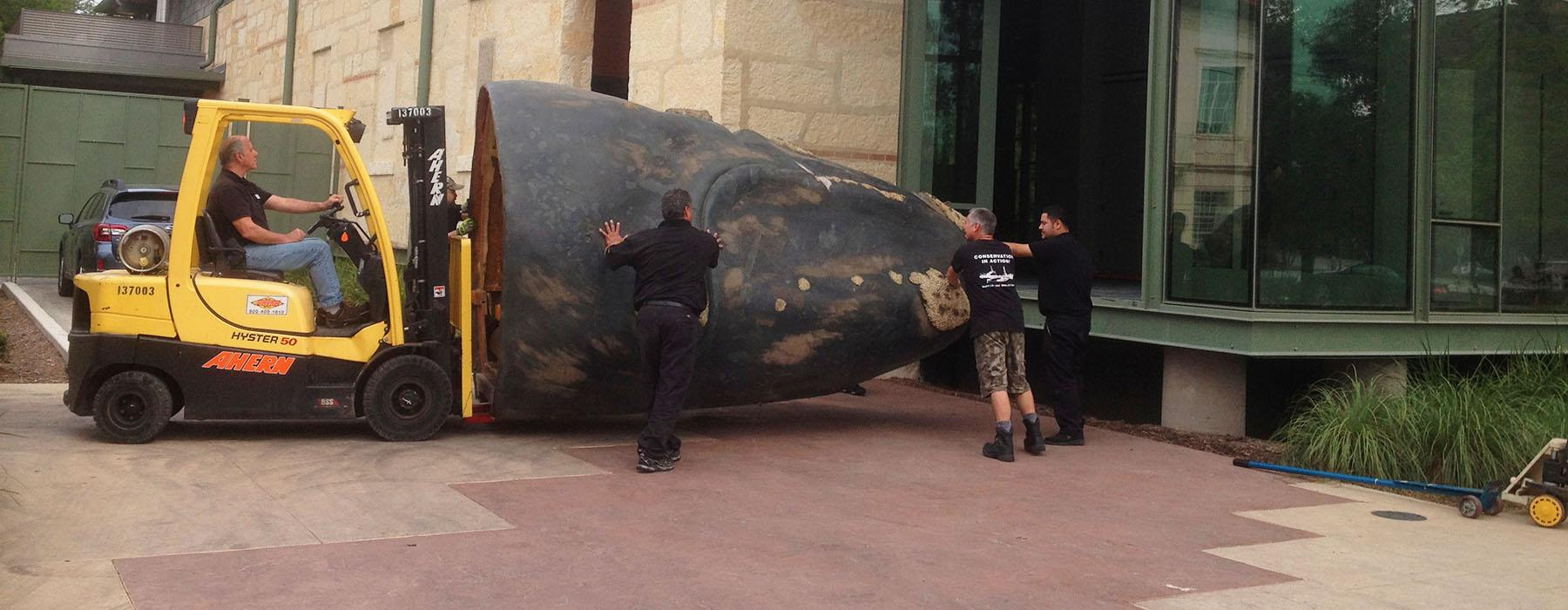 A forklift is used to load part of a whale prop into a building