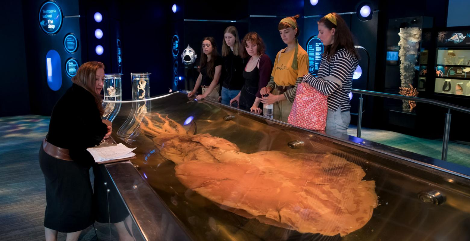 A school group look at the colossal squid