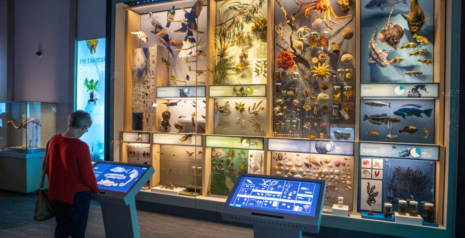 A visitor looks at a huge glass wall cabinet full of nature specimens