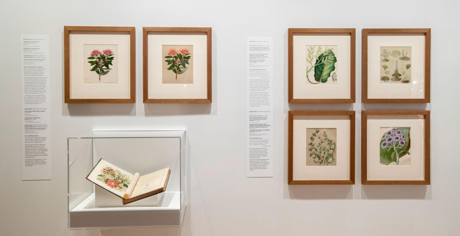 A book and pictures on the wall featuring botanical watercolours