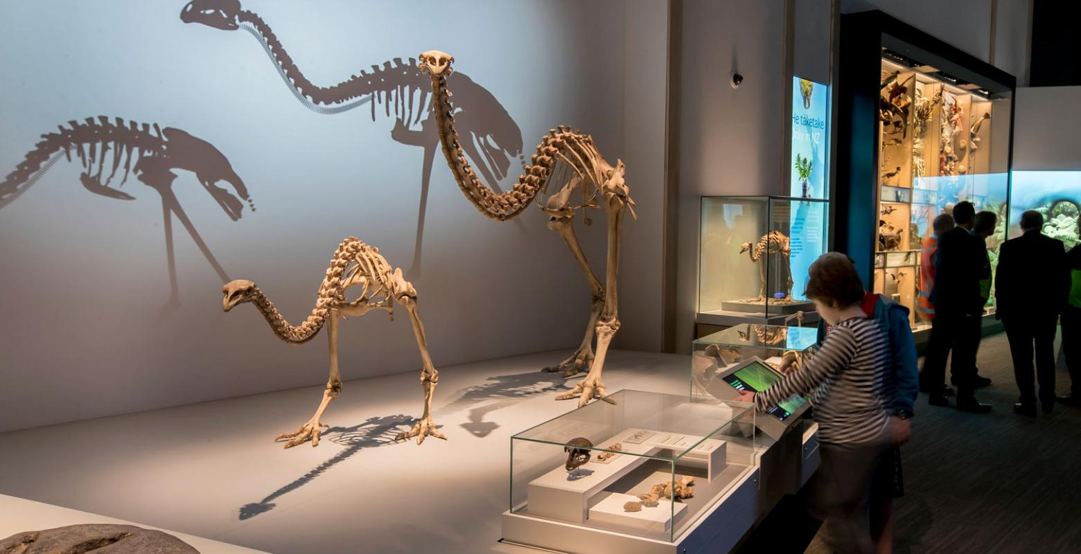Visitors looking at moa skeletons