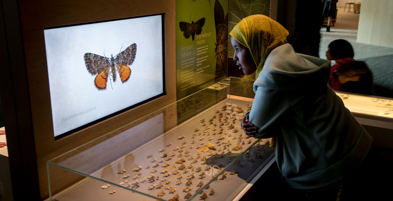A child looks at New Zealand moths