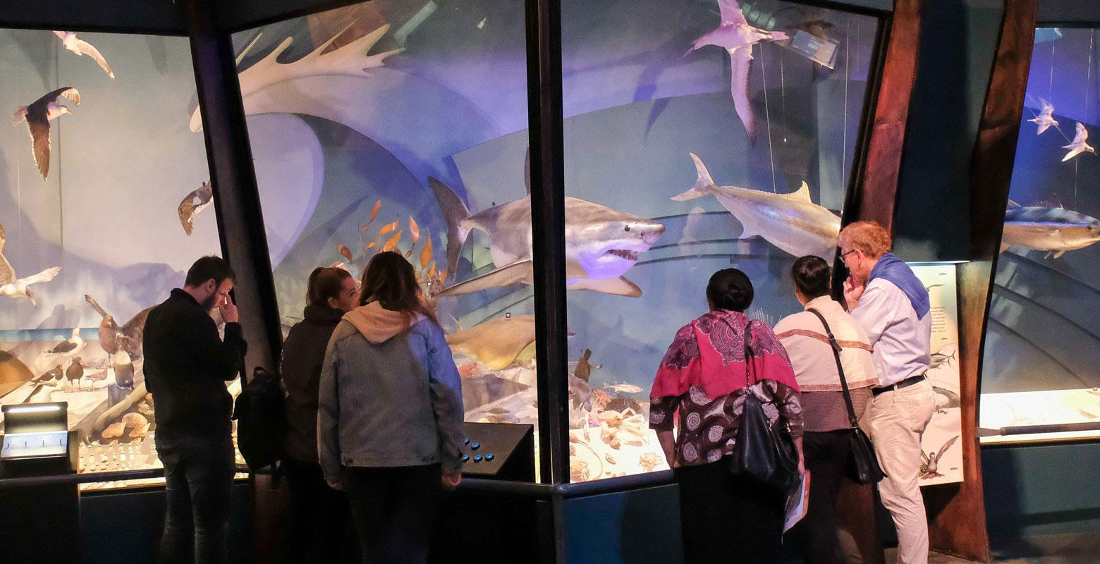 Visitors looking at marine specimens including a shark