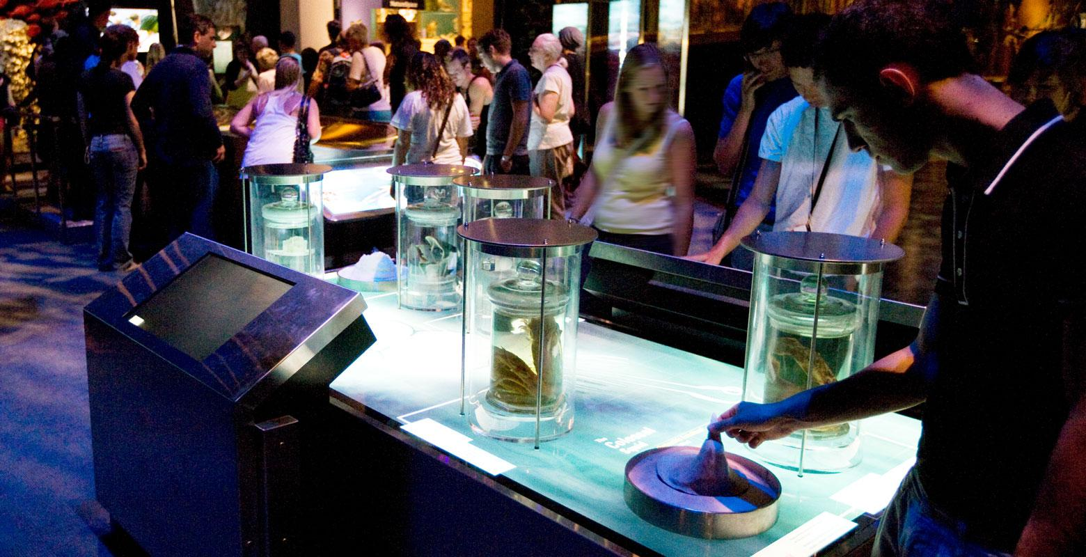 Visitors look at the huge hooks on the squid's tentacles