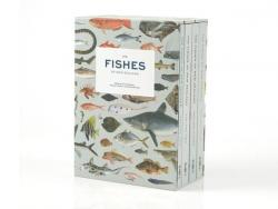 The Fishes of New Zealand book