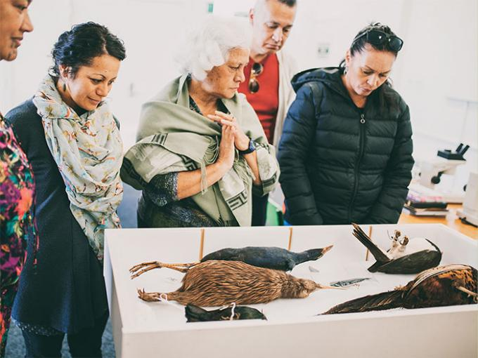 A group look at some dead birds in a box including a kiwi