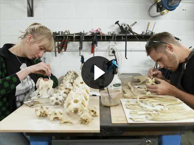 Two people work on a model of full-size model of a moa skeleton