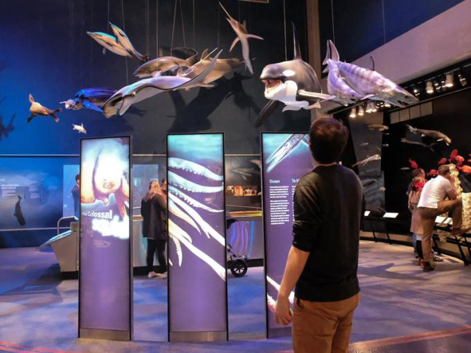 Marine life in the Mountains to Sea exhibition