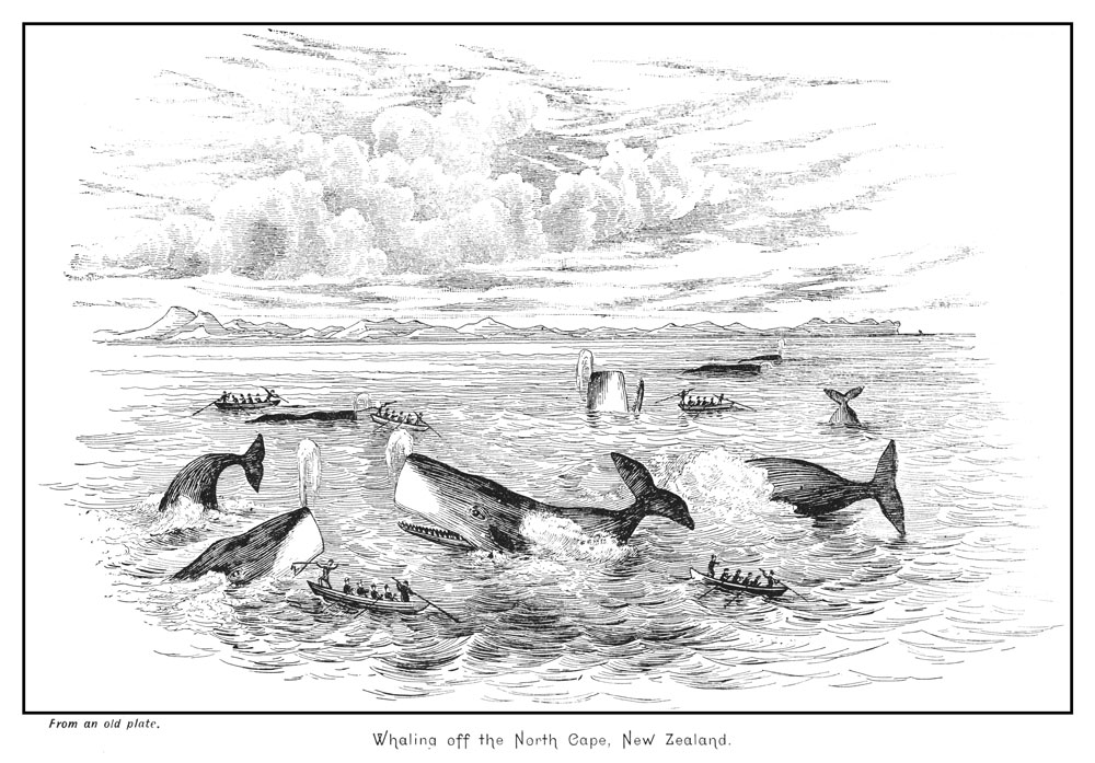 Engraving of whales being hunted